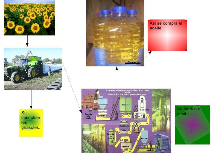 Circuito Productivo Del Trigo : Circuito productivo del aceite