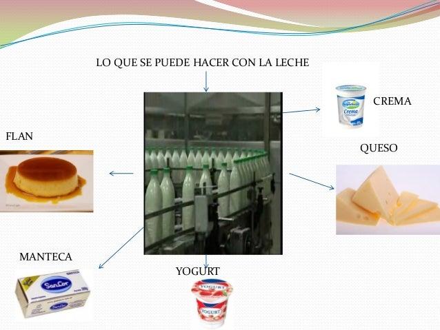 Circuito Productivo De La Leche : Circuito productivo de la leche liam y uli