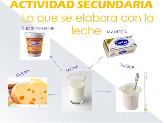 Circuito De La Leche : Circuito productivo de la leche lu meli magui