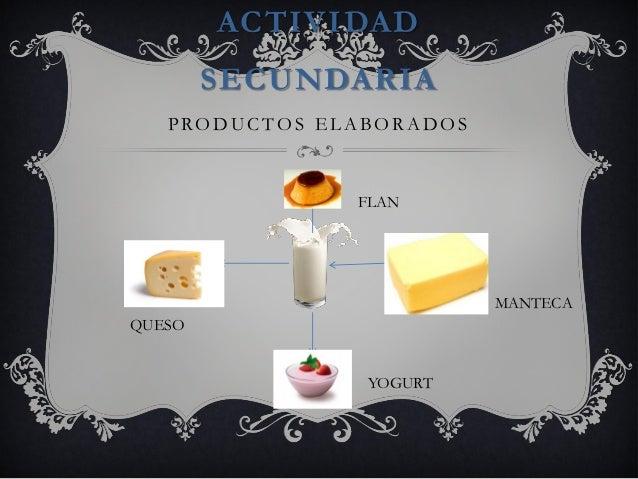 Circuito Productivo De La Leche : Circuito productivo de la leche o de la gio ezi nico