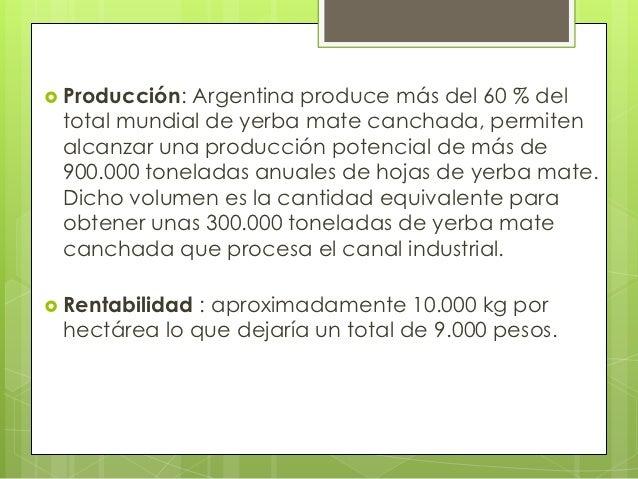 Circuito Productivo De La Yerba Mate : Circuito productivo de la yerba mate alarcon y rossi