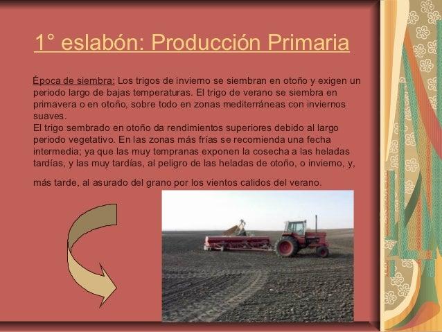 Circuito Productivo Del Trigo : Circuito productivo del trigo