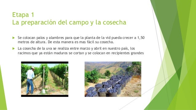 Circuito Productivo Del Vino : Circuito productivo del vino nicolas pereyra