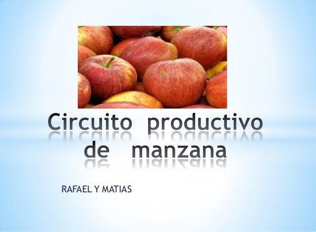Circuito Productivo : Circuito productivo de manzana rafael y matias