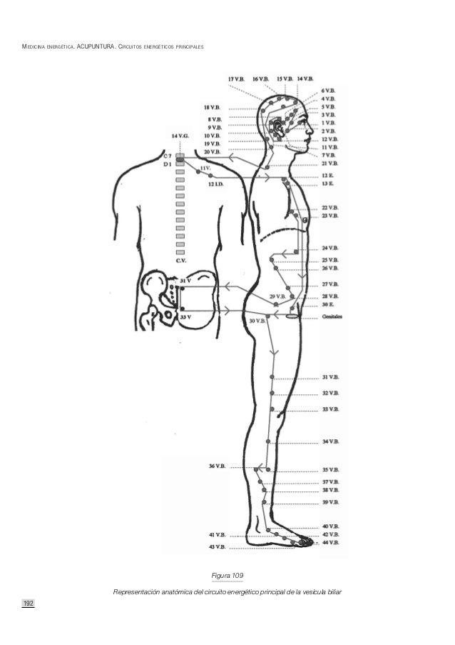 Circuitos energeticos del ser humano
