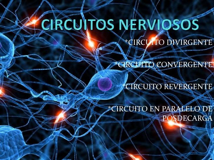 Circuitos nerviosos