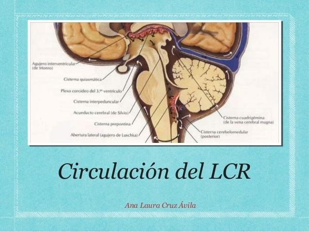Circulación del LCRAna Laura Cruz Ávila