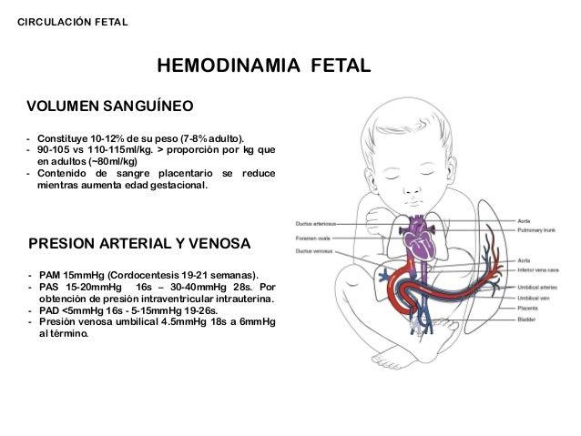 Circuito Sanguineo : Circuito sanguineo fetal dialisis y hemodialisis ppt