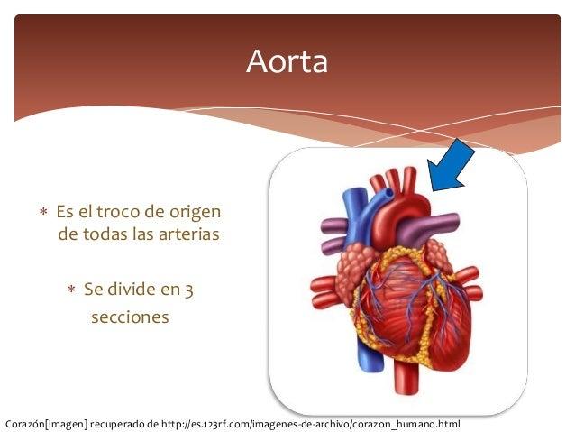 Circulación pulmonar, arco aortico y sus ramas
