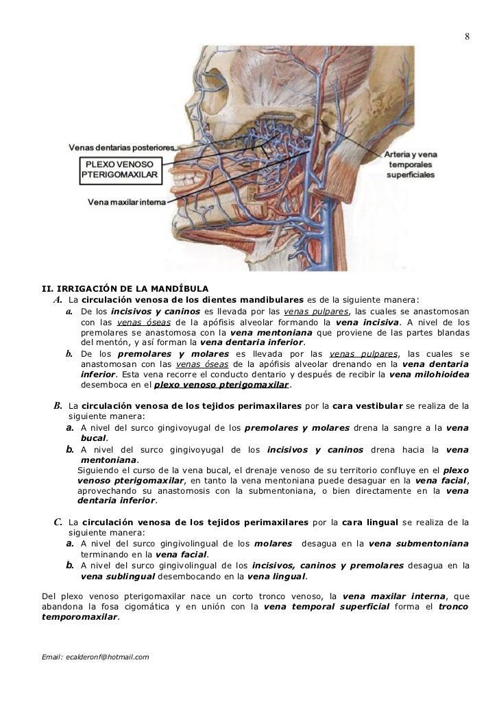 CIRCULACION ARTERIAL Y VENOSA DEL SISTEMA DENTARIO Y ESTRUCTURAS PERI…