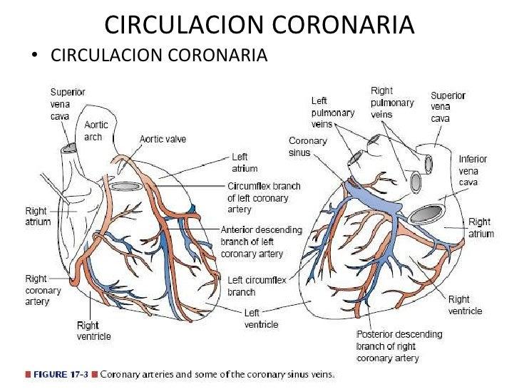 J Stent Circulacion coronaria