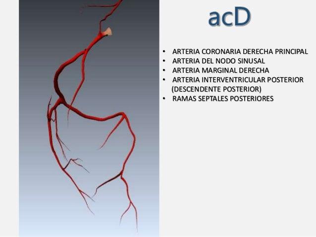 Circulacion Coronaria: Anatomia