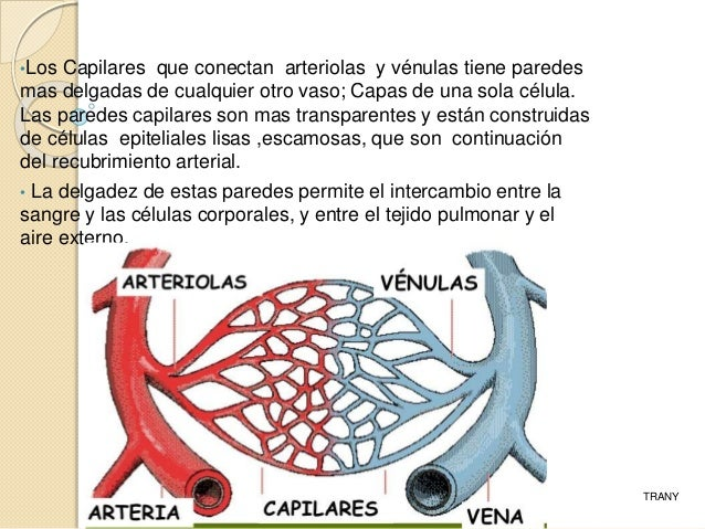 Circulacion sistemica