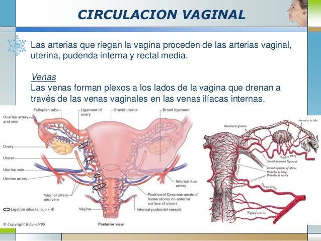 Circulacion urogenital - Medias para la circulacion ...