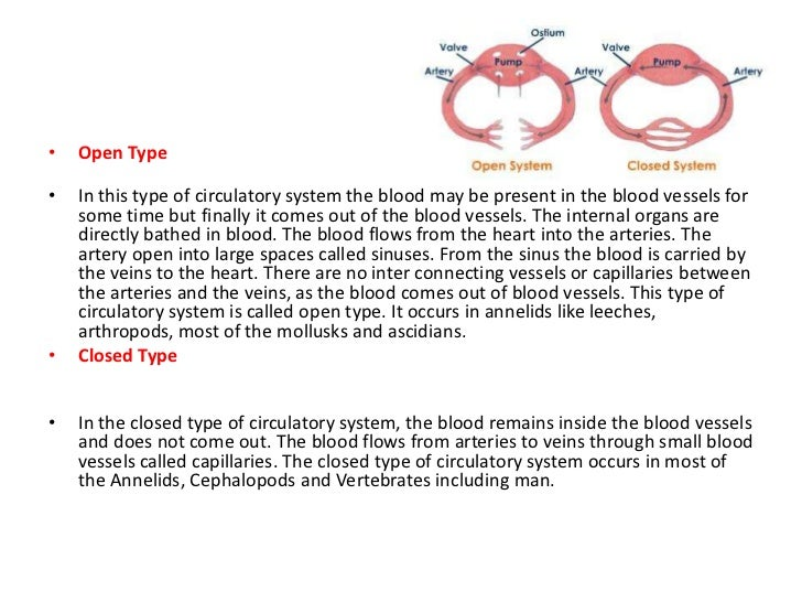 open type circulatory system