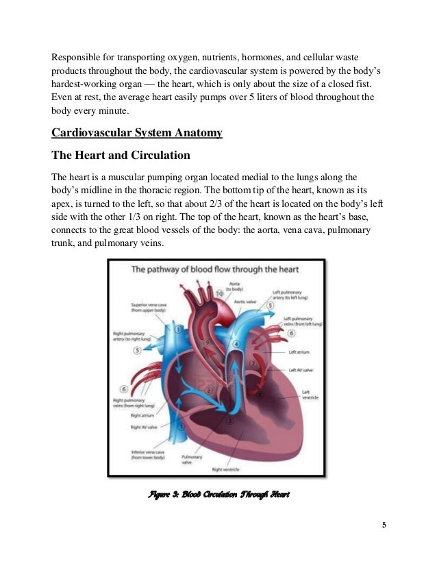 Assignment On Circulation Of Blood