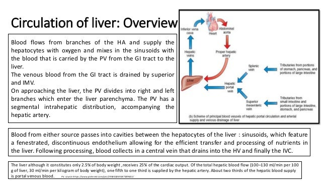 Circulation Of Liver Portosystemic Collaterals