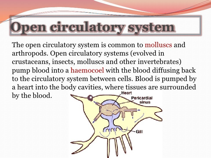 14  20TOPOGRAPHY 20AND 20STRUCTURE 20OF 20MALE 20REPRODUCTIVE additionally Circulation Powerpoint likewise Book   The Early Embryology of the Chick 13 additionally Introduction To Valves Ball Valve also I0000HwDeqYh6RYk. on closed body cavities