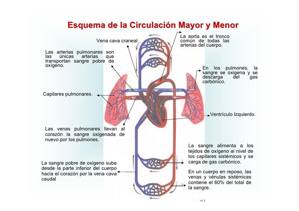 Circuito Mayor : Circulatorio