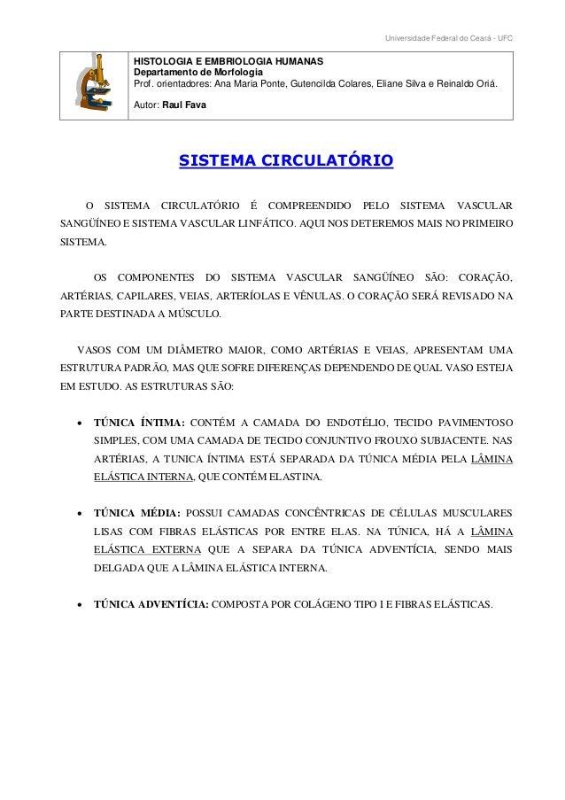 Universidade Federal do Ceará - UFC HISTOLOGIA E EMBRIOLOGIA HUMANAS Departamento de Morfologia Prof. orientadores: Ana Ma...
