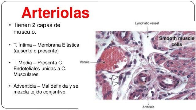 Sistema Circulatorio Histologia