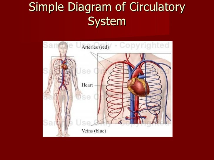 Circulatory system 3 simple diagram ccuart Image collections