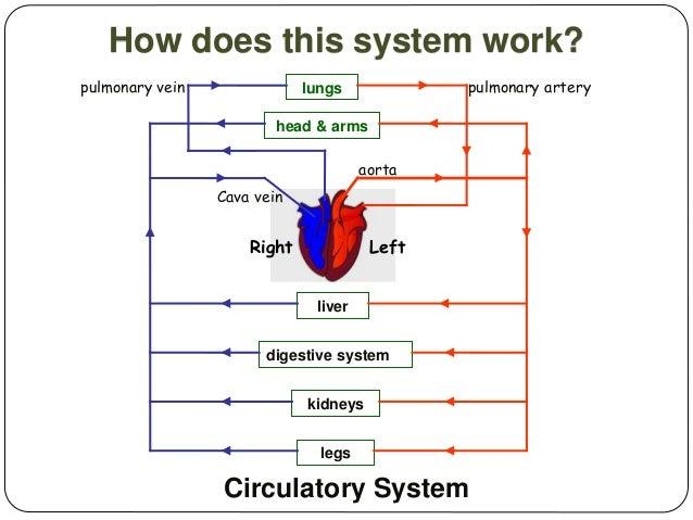 Blood Clot In Heart >> Nutrition function II.