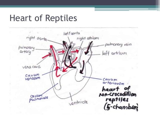 plants research paper biology pdf