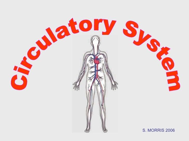 Circulatory System S. MORRIS 2006