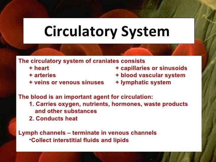 Circulatory System  <ul><li>The circulatory system of craniates consists  </li></ul><ul><li>+ heart + capillaries or sinus...