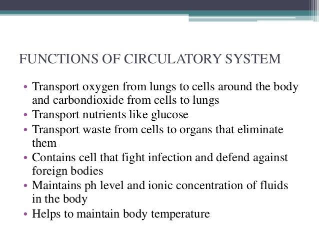 circulatory system, Human Body