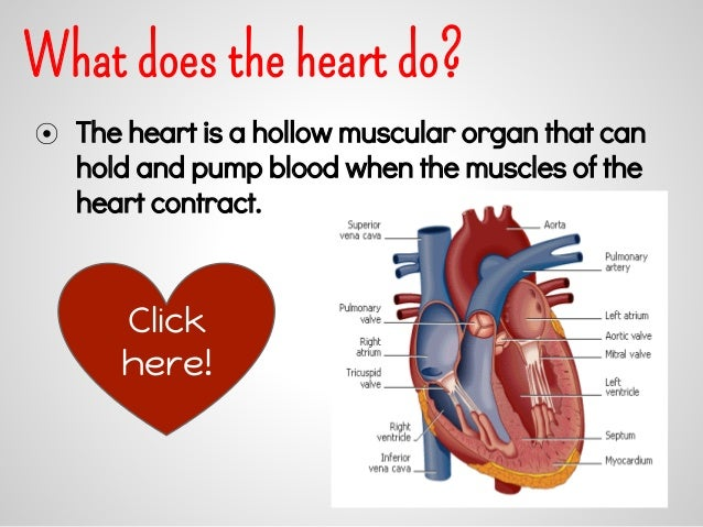 what does heart do in circulatory system