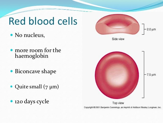 how to draw an erythrocyte