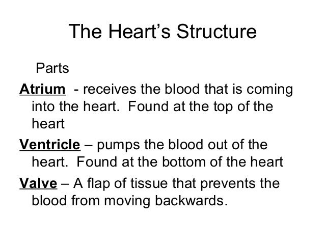 circulatory system notes Cardiovascular fluid mechanics - lecture notes in the introductory part of these  notes a short overview of the circulatory system with respect to blood flow and.