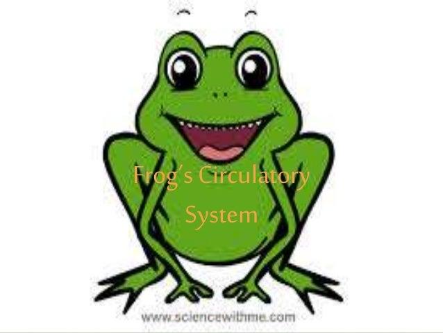 circulatory system of frog 1 638?cb=1425429368 circulatory system of frog