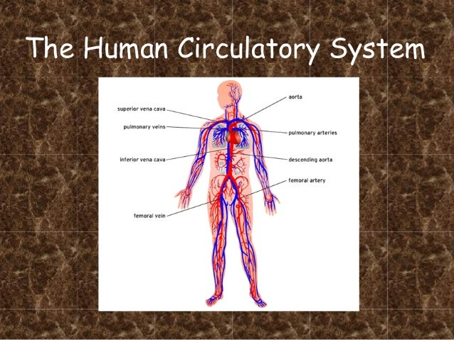 Circulatory system pdf for Home circulation system