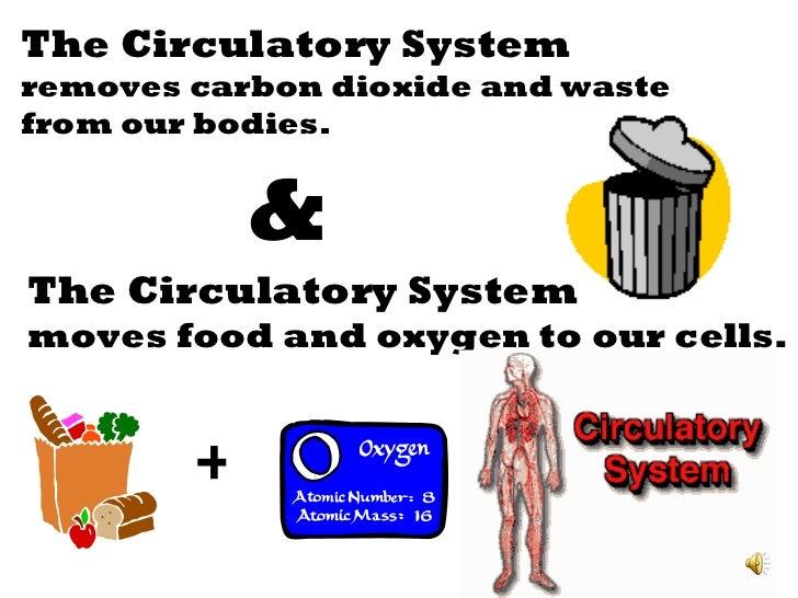 Circulatory system slide show Slide 3