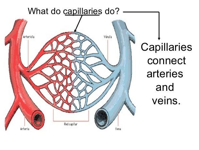 what do capillaries do