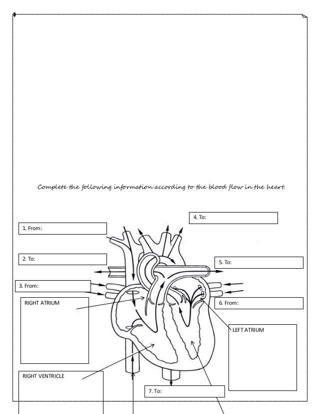 Circulatory System Printable Worksheets Free Worksheets