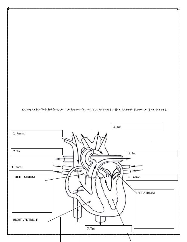 Circulatory system worksheet – Circulatory System Worksheet