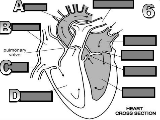 heart and lungs powerpoint review game quiz circulatory system card. Black Bedroom Furniture Sets. Home Design Ideas