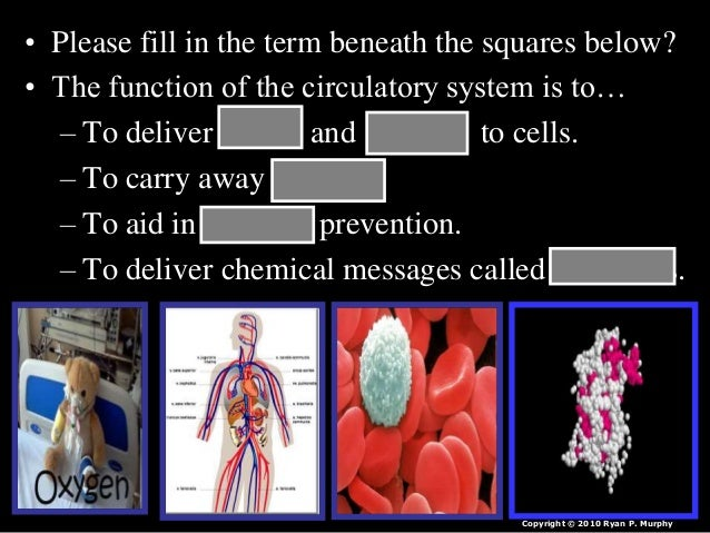 Heart And Lungs Powerpoint Review Game Quiz Circulatory System Card