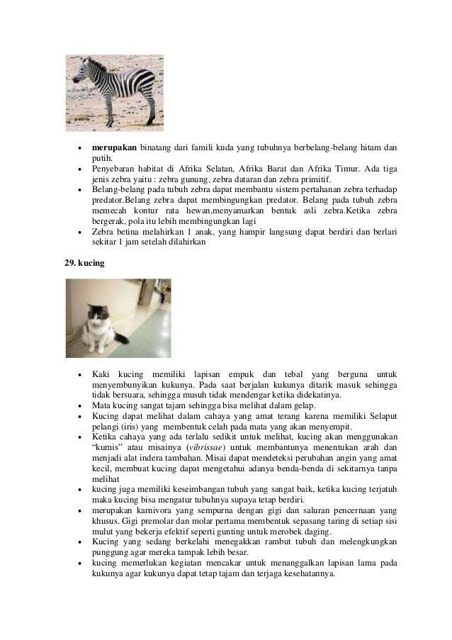 Kucing Hitam Putih Belang Chocolate Break Kepribadian