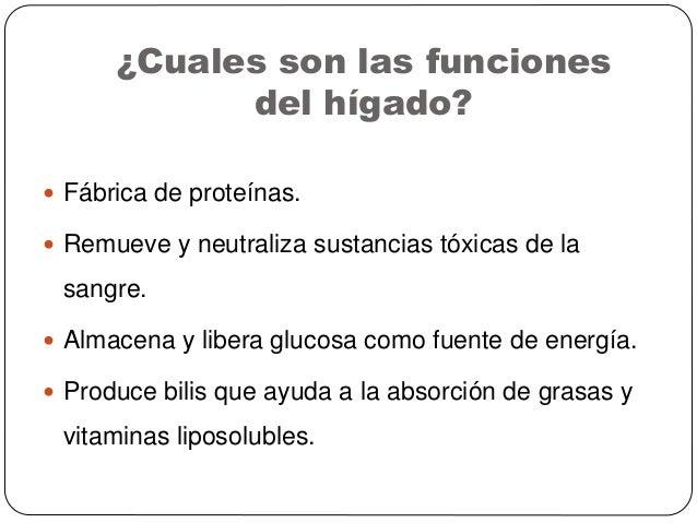 Cuales Son Las Funciones Del Higado - Best Fun 2017