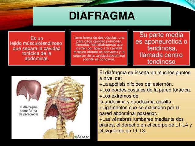 anatomia del torax en cirugia