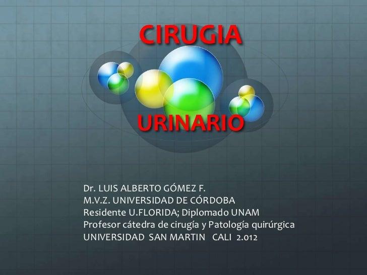 CIRUGIA            URINARIODr. LUIS ALBERTO GÓMEZ F.M.V.Z. UNIVERSIDAD DE CÓRDOBAResidente U.FLORIDA; Diplomado UNAMProfes...