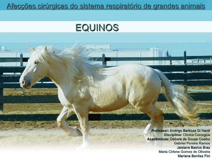 Afecções cirúrgicas do sistema respiratório de grandes animais   EQUINOS Professor:  Andrigo Barboza Di Nardi Disciplina: ...