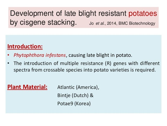 late blight resistant potatoes by cisgene stacking R8is found in five late blight resistant  from natural stacking to  kim s-j, et al development of late blight resistant potatoes by cisgene.
