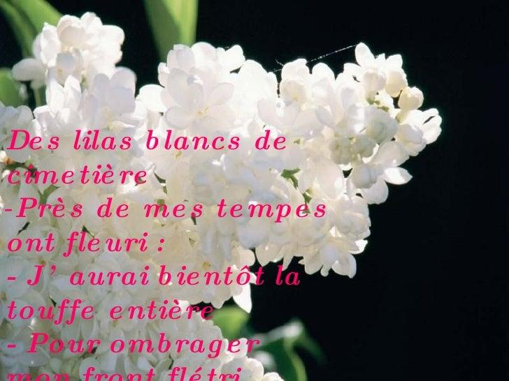 Citations Fleurs