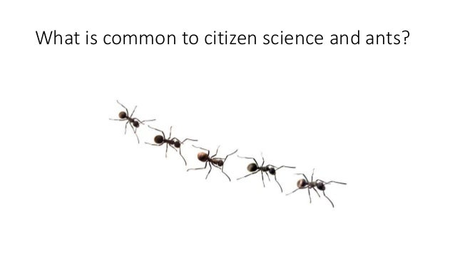What is common to citizen science and ants?